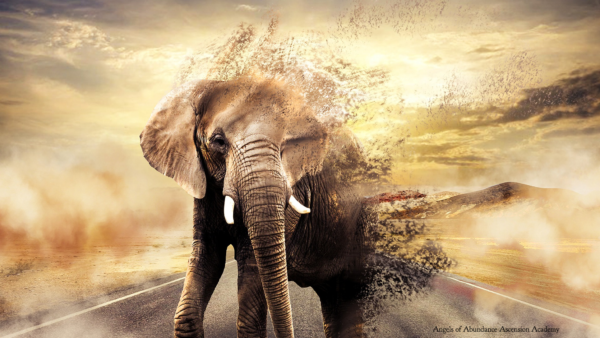 Elephant on the road, dissolving into a glorious golden sky as he's leaving the tribes golden