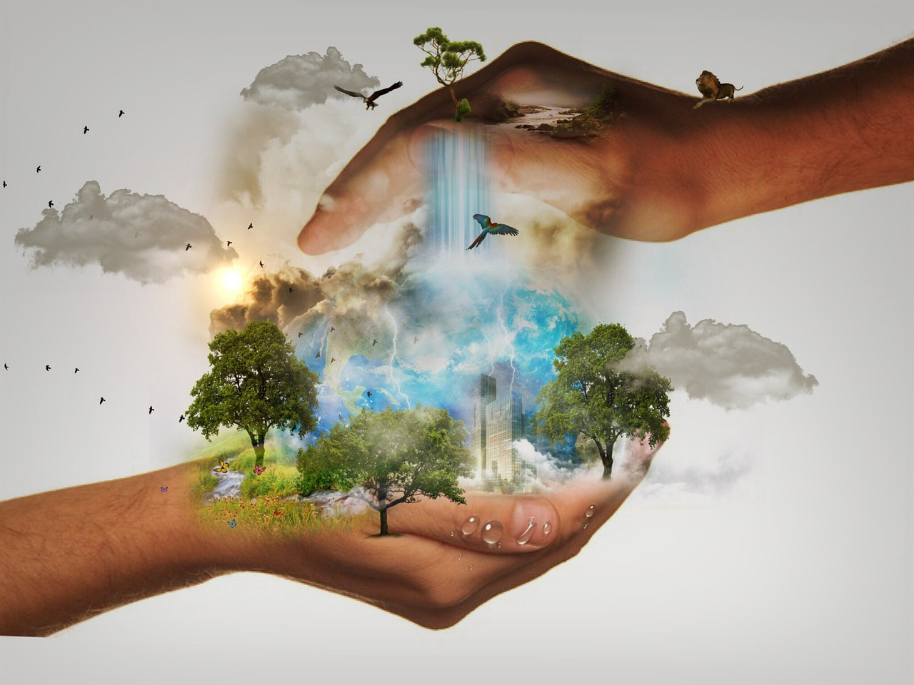hands holding nature