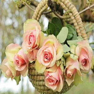 roses-2205009_1920-624x428