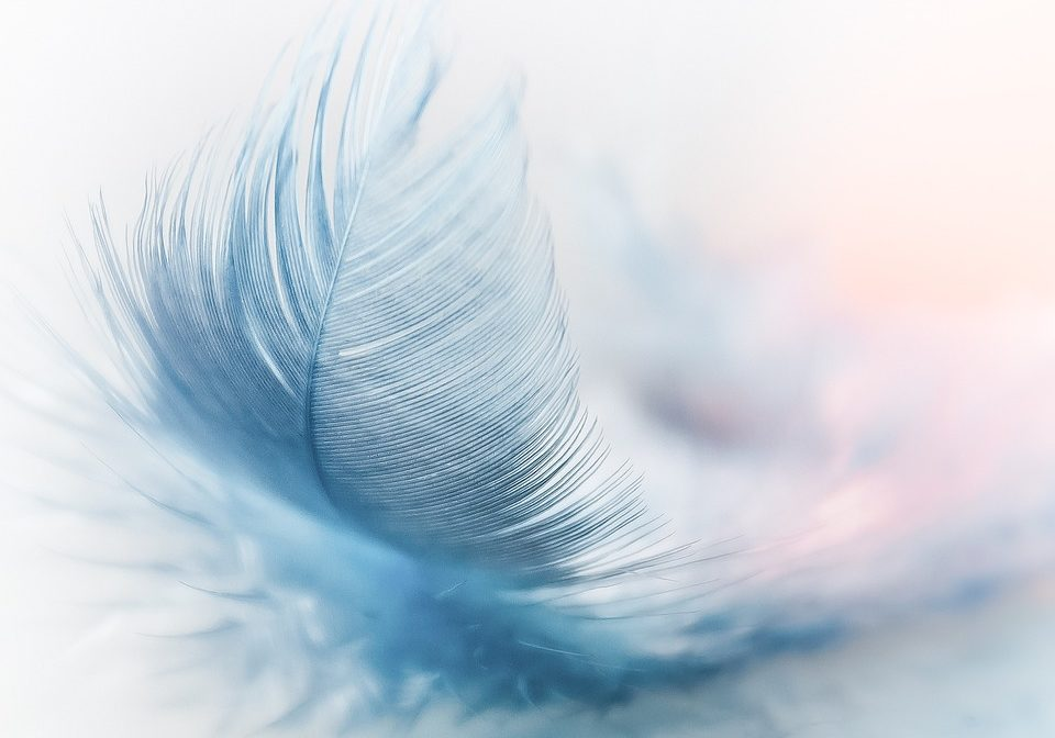 feather-3010848_960_720